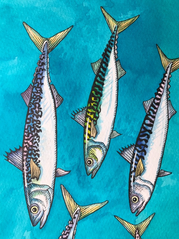Mackerel Fish by Jane Bro