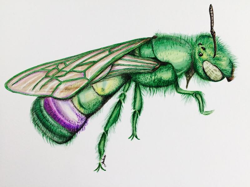 Hulk Bee