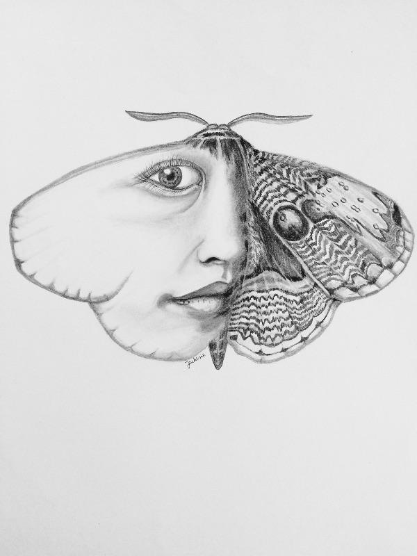 Oriental Owl Moth