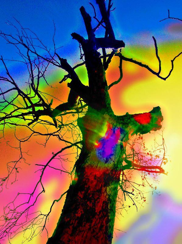 Tree No2