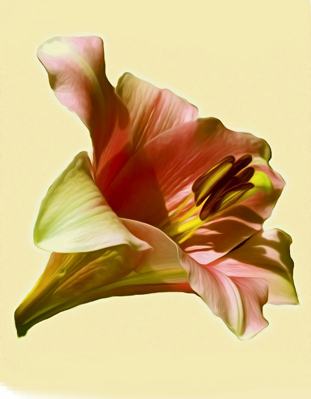 Lily Digital Art