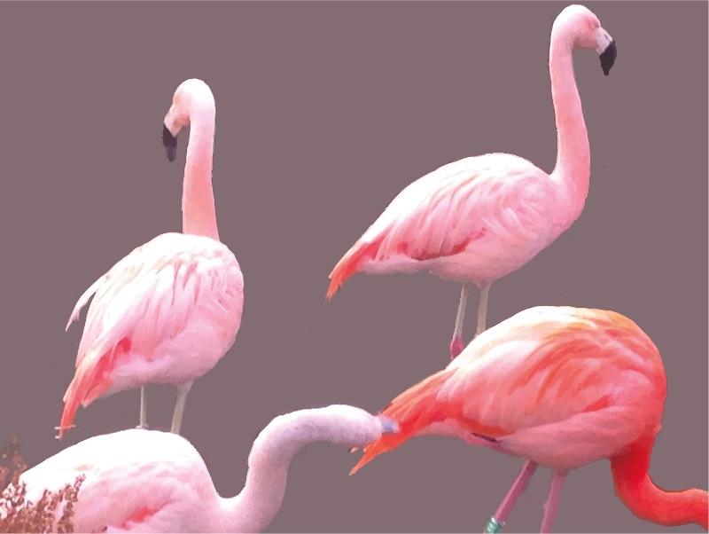Flamin Flamingos