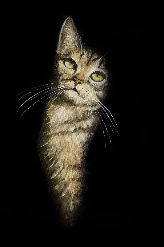Cat In The Dark