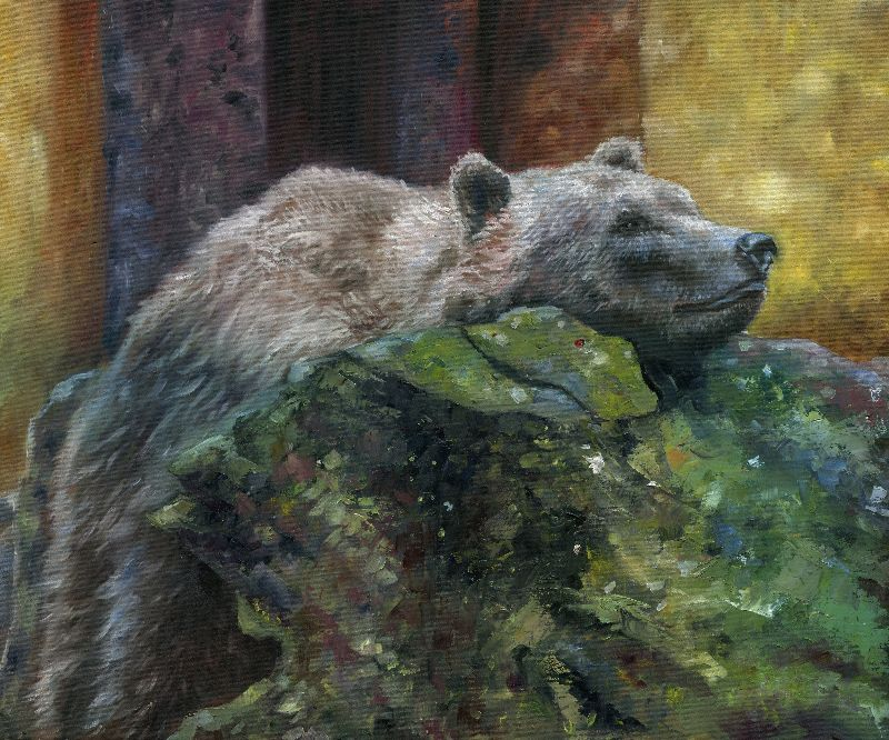 Peaceful bear