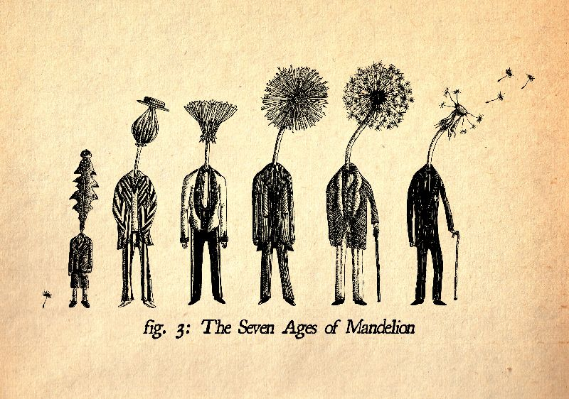 Seven Ages of Mandelion