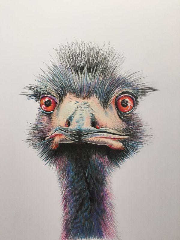 Ernie the ostrich