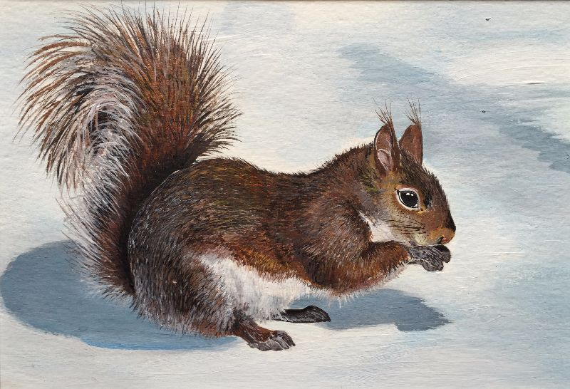 Winter woodland squirrel