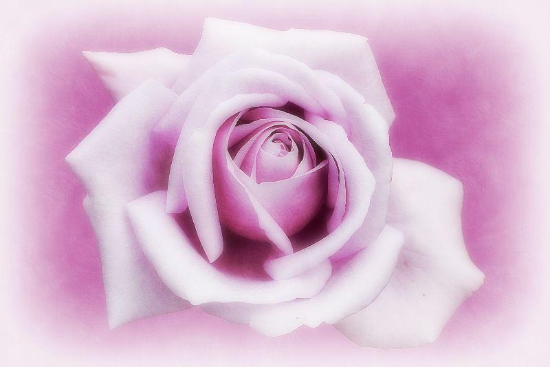 Lavender Mood