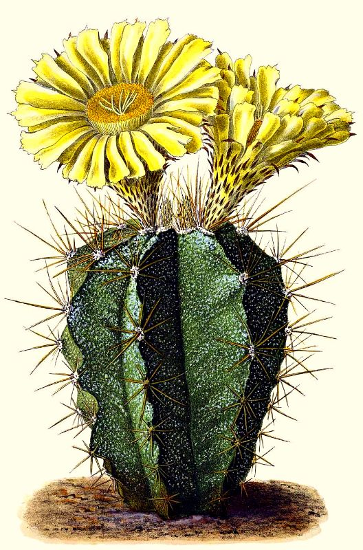 Vintage cactus flower