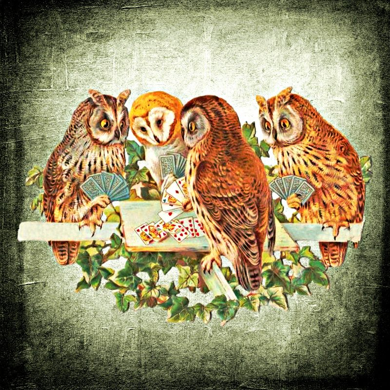 Vintage owls play cards
