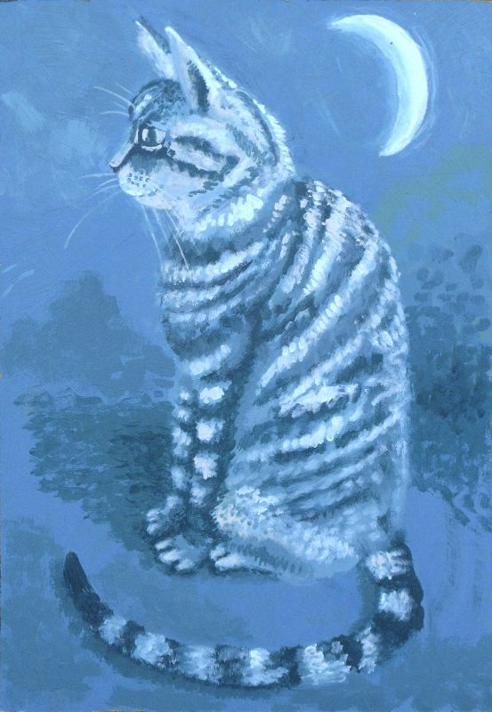 Tabby by moonlight