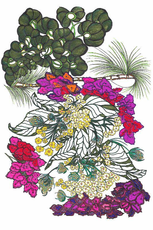 La Gomera Blossoming