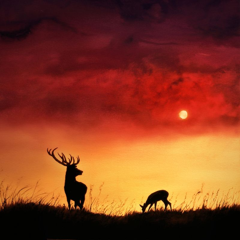 Stag and deer at sunset