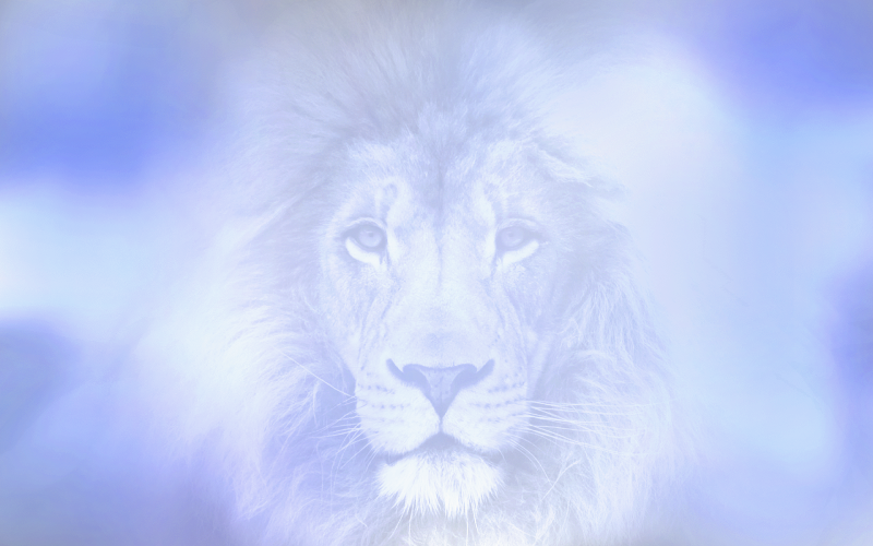 Lion in the Cloud