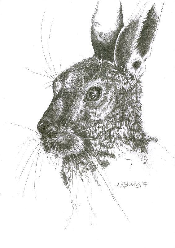 Graphite Hare Portrait