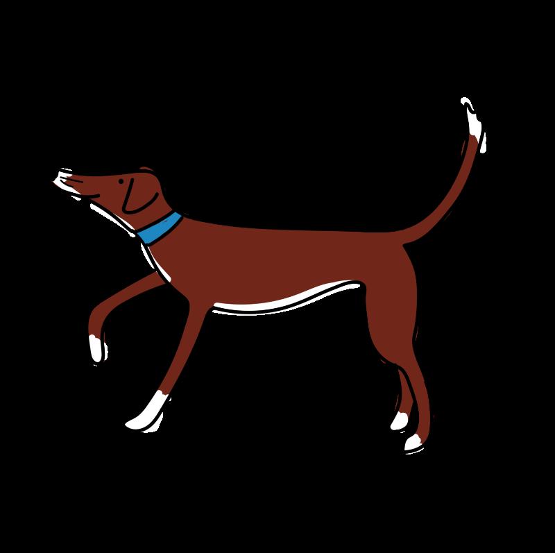 Cute lurcher dog