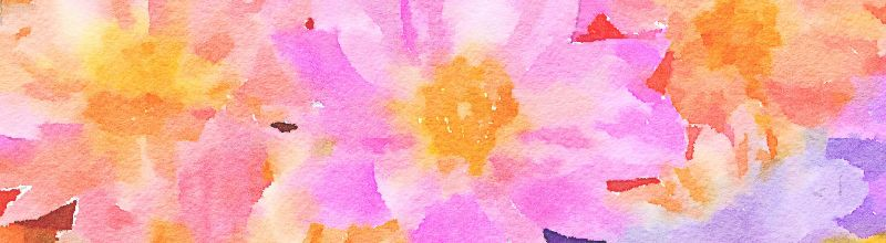 Pink Daisy Watercolour