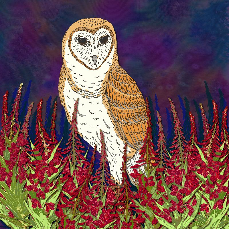 Barn Owl  Fireweed