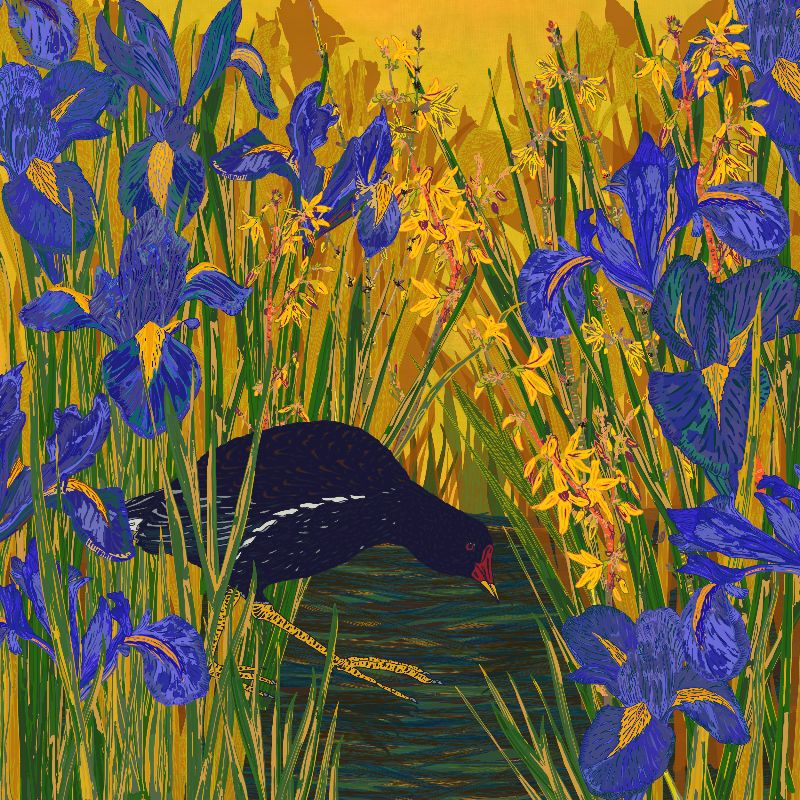 Iris and Moorhen