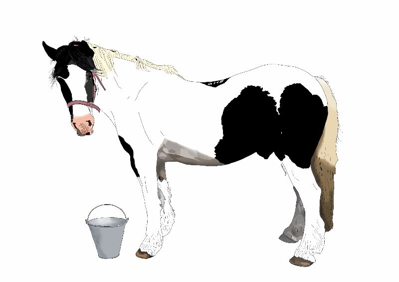 Horse and Bucket