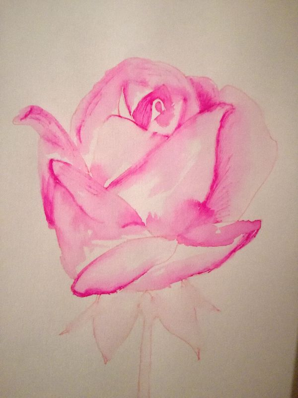 Rose everlasting