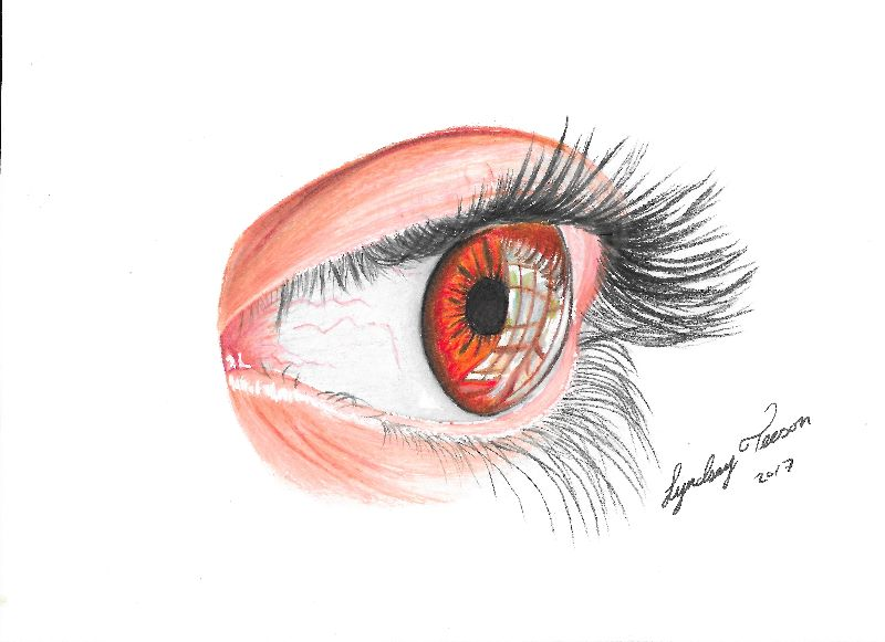 a reflection in the eye
