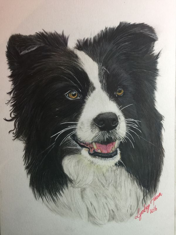 beauty of a collie