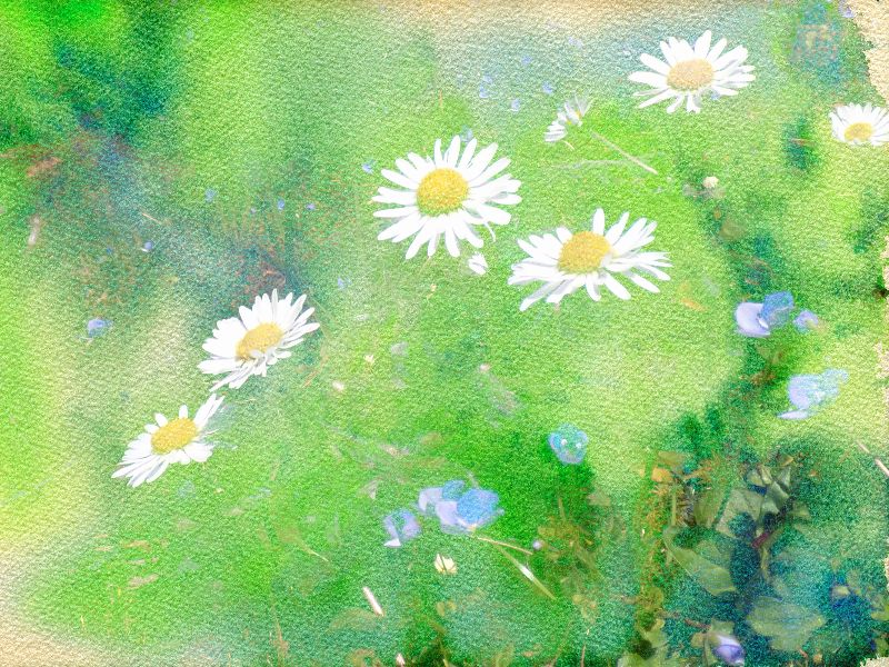 Forget Me Not and Daisies