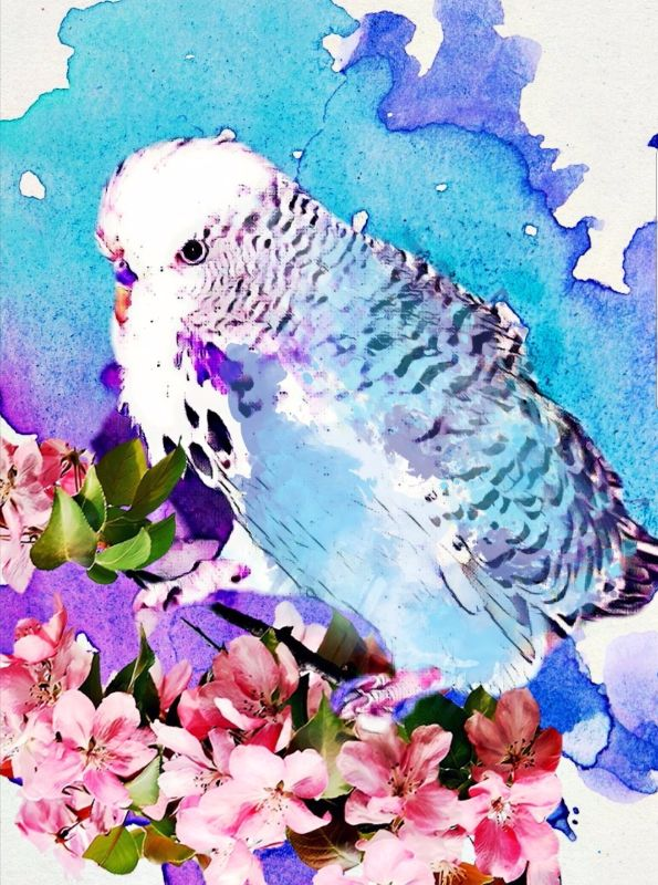 Budgie and blossoms