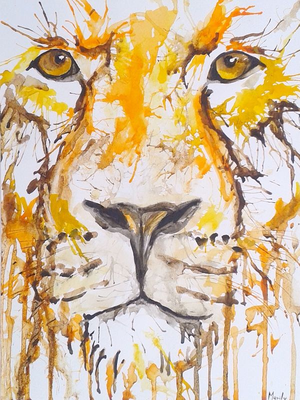 Drippng lioness