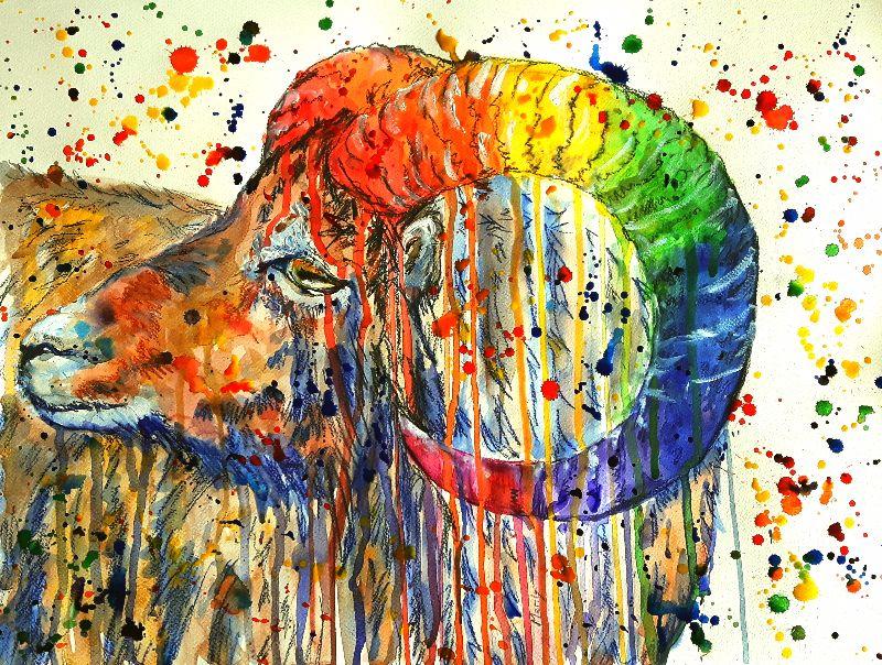 Rainbow ram