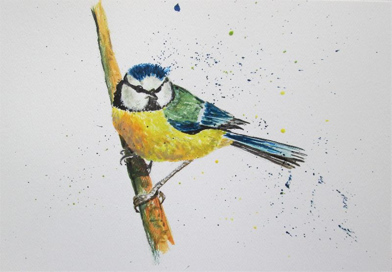 Blue Tit Garden Bird