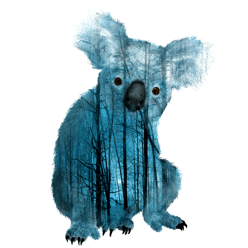 Misty Forest Koala Bear