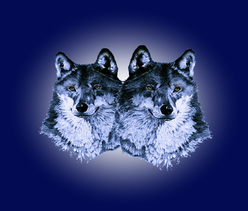 wolves in sapphire