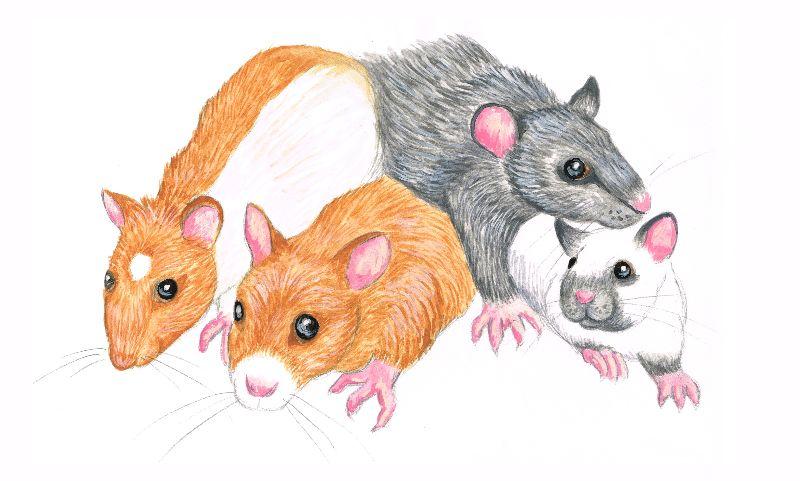 Rat Mischief
