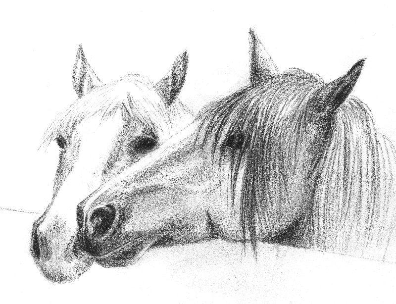 pony friends