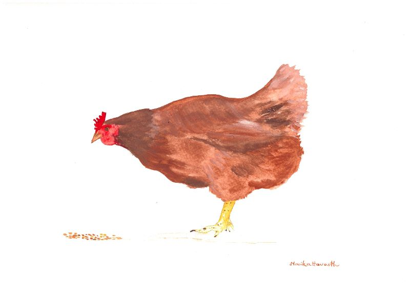 Hen watercolour painting