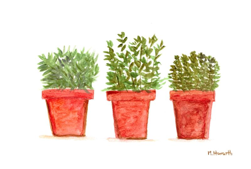 Herbs watercolour