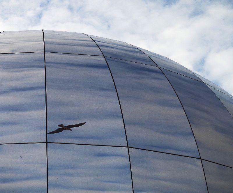 Bird in Bristol