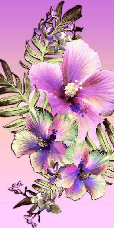 Hula Hibiscus Tropical