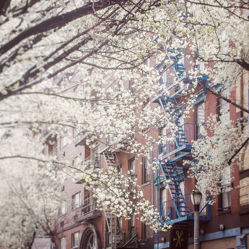 Blossom Of East Village