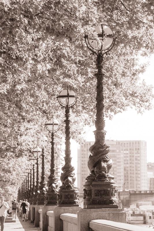 Leafy Promenade