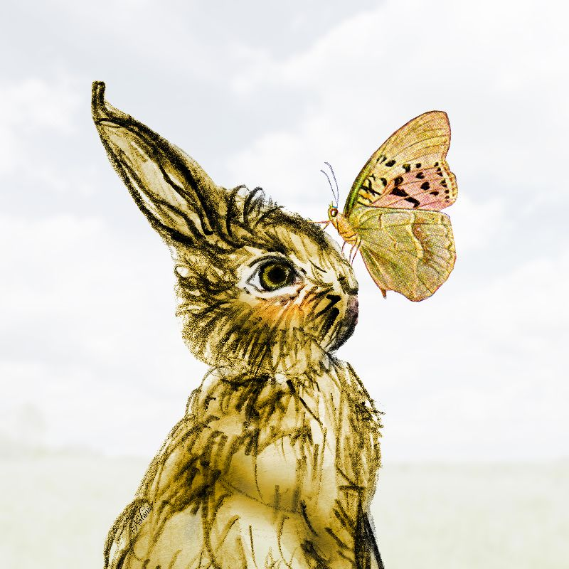 Easter Bunny Butterfly