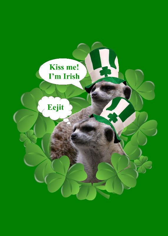 Funny Irish Meerkats