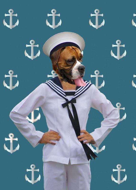 Funny sailor dog animal