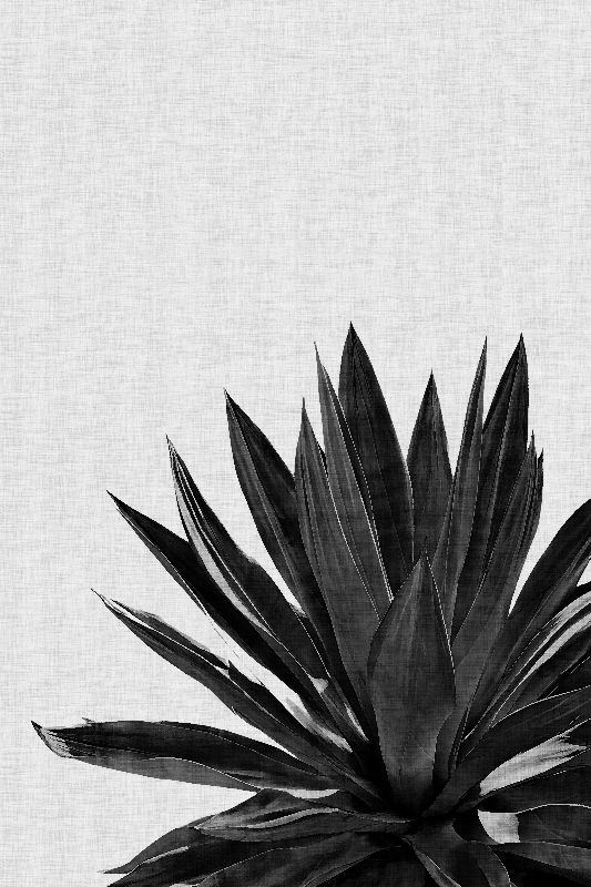 Agave Cactus Black White