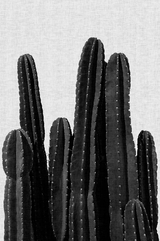 Cactus Black  White