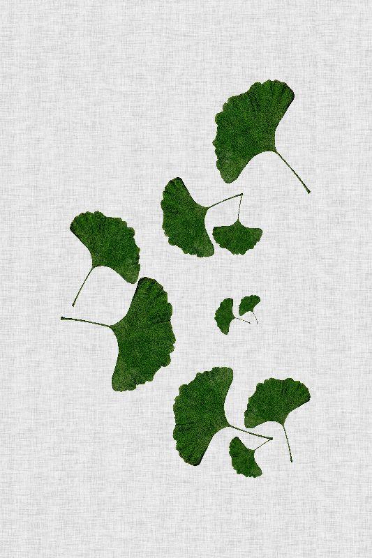 Ginkgo Leaf I