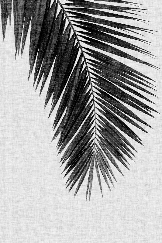 Palm Leaf Black  White I