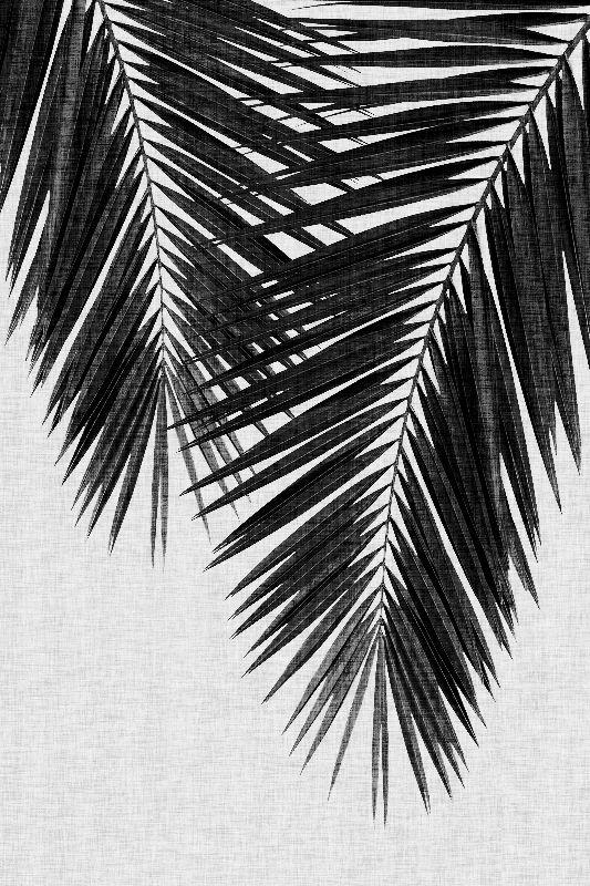 Palm Leaf Black White II
